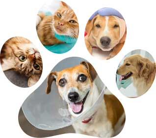 paw images